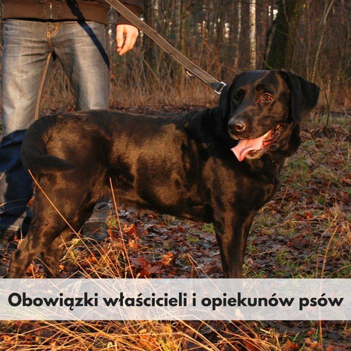 Obowiązki właścicieli i opiekunów psów