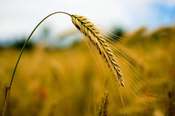 Apel Prezes KRUS do rolników o zachowanie zasad bezpieczeństwa podczas żniw
